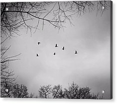 Flying South Acrylic Print by Richie Stewart