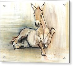 Foal, 2012, Charcoal Conté And Pastel On Paper Acrylic Print