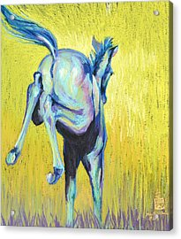 Foal At Play Acrylic Print by Sally Buffington