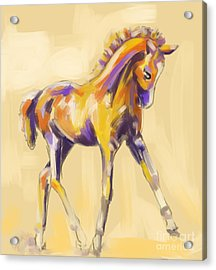 Foal Colour And Grace Acrylic Print