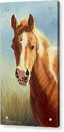 Foal Portrait Acrylic Print by Paul Krapf