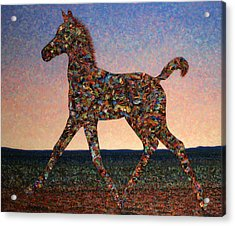Foal Spirit Acrylic Print by James W Johnson