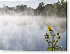 Acrylic Print featuring the photograph Fog And Sunflowers by Rob Graham