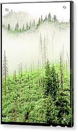 Fog And Trees Acrylic Print