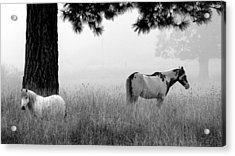 Acrylic Print featuring the photograph Fog Bound by Julia Hassett
