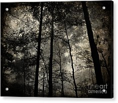 Fog In The Forest Acrylic Print by Lorraine Heath