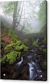 Fog In The Forest Acrylic Print by Marilar Irastorza