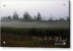 Fog Line Above Woodland Acrylic Print by Andre Paquin