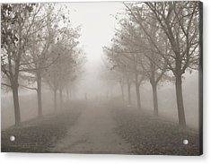 Fog Monochrome Acrylic Print by Kathy Bassett