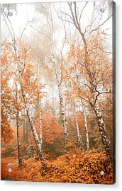 Foggy Autumn Aspens Acrylic Print by Eti Reid