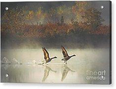 Foggy Autumn Morning Acrylic Print by Elizabeth Winter