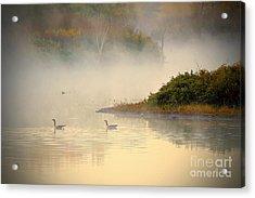 Foggy Autumn Swim Acrylic Print by Elizabeth Winter
