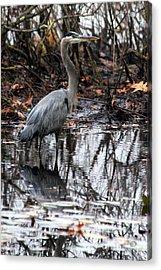 Acrylic Print featuring the photograph Foggy Bog Heron by Kenny Glotfelty