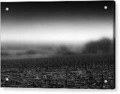 Foggy Field Acrylic Print by Tom Gort