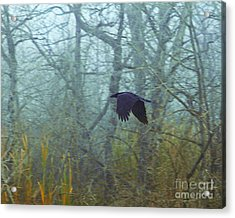 Foggy Flight Acrylic Print by Judy Wood