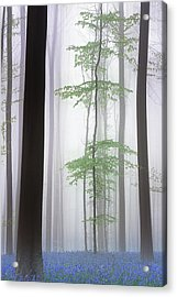 Foggy Forest .... Acrylic Print by Piet Haaksma