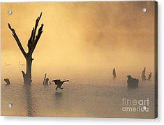 Foggy Landing Acrylic Print by Elizabeth Winter