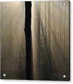 Acrylic Print featuring the photograph Foggy Mornin' by Paul Noble