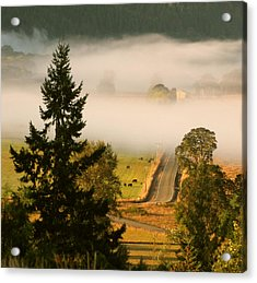Foggy Morning Drive Acrylic Print by Katie Wing Vigil
