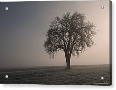 Foggy Morning Sunshine Acrylic Print