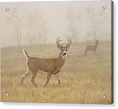 Foggy Morning-whitetail Acrylic Print by Paul Krapf
