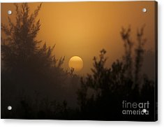 Foggy Sunrise Acrylic Print by Meg Rousher