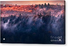 Foggy Sunset Acrylic Print by HD Connelly