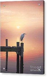 Foggy Sunset On Egret Acrylic Print by Benanne Stiens