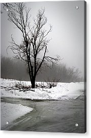 Foggy Tree Acrylic Print