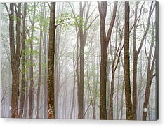 Foggy Trees In Forest Acrylic Print