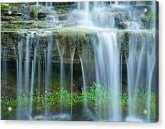 Foilage Acrylic Print by Jill Laudenslager