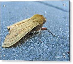 Fokker Moth Acrylic Print