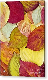 Acrylic Print featuring the photograph Foliage Quilt by Alan L Graham