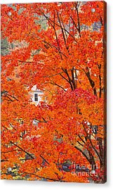 Acrylic Print featuring the photograph Foliage Window by Alan L Graham