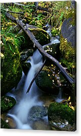 Acrylic Print featuring the photograph Follow Me by Jeremy Rhoades
