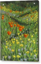 Poppy Trail Acrylic Print by Laurie Morgan