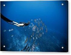 Follow The Fish Acrylic Print by One ocean One breath