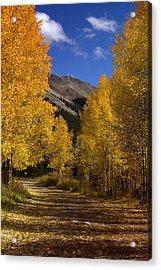 Acrylic Print featuring the photograph Follow The Gold by Ellen Heaverlo