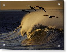 Acrylic Print featuring the photograph Follow The Leader 73a2324 by David Orias