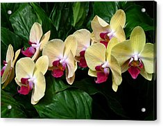 Acrylic Print featuring the photograph Follow The Leader by Cindy McDaniel