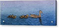 Follow The Leader II Acrylic Print by Sharon Farber