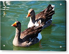 Acrylic Print featuring the photograph Follow The Leader by Linda Segerson