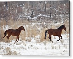 Follow The Leader Acrylic Print by Mike  Dawson