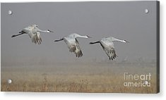 Acrylic Print featuring the photograph Follow The Leader by Ruth Jolly