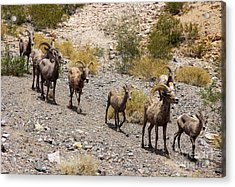 Follow The Leader Acrylic Print by Tammy Espino
