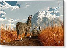 Follow The Llama Acrylic Print