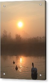 Follow Us Acrylic Print by Linsey Williams