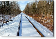 Acrylic Print featuring the photograph Follow Your Own Path by Debbie Oppermann