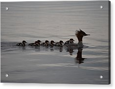 Following Mom Acrylic Print by James Petersen
