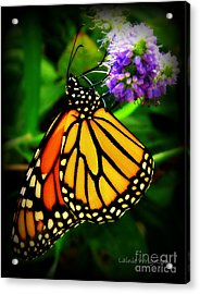 Food For Flight Acrylic Print by Lainie Wrightson